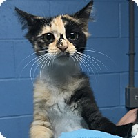 Adopt A Pet :: Ginger - Newport, NC