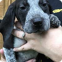 Adopt A Pet :: Onie (Danielle- Camden) - Blossvale, NY
