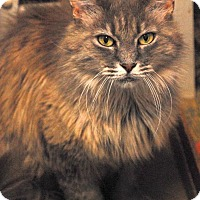 Adopt A Pet :: Leia - Shelbyville, TN