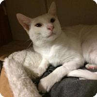 Adopt A Pet :: Bodhi - Hazlet, NJ