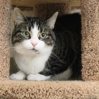 Adopt A Pet :: Bridgett - Hudson, NY