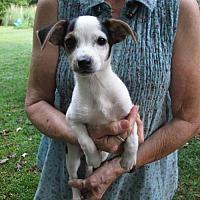 Adopt A Pet :: JASPER - Lincolndale, NY