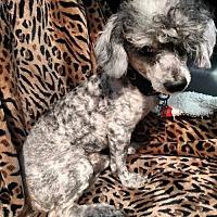 Adopt A Pet :: EDDIE - WOODSFIELD, OH