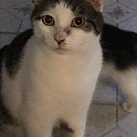 Adopt A Pet :: Ranger - Middlebury, CT