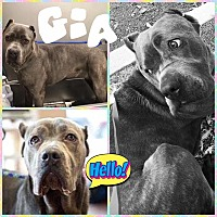 Adopt A Pet :: Gia - Baltimore, MD
