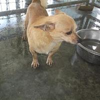 Adopt A Pet :: Jojo - Bonifay, FL