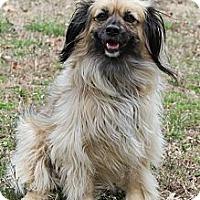 Adopt A Pet :: Buffy - Wytheville, VA