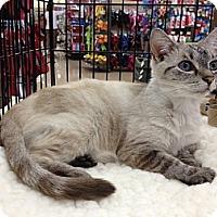 Adopt A Pet :: Claire - Vero Beach, FL