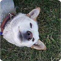 Adopt A Pet :: JinHee - Southern California, CA
