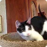 Adopt A Pet :: Sylvester - Pace, FL