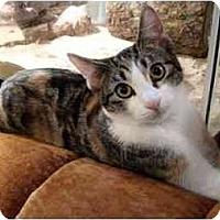 Adopt A Pet :: Nancy - Portland, OR