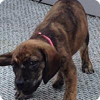 Adopt A Pet :: Wilma-adoption in progress - Marshfield, MA
