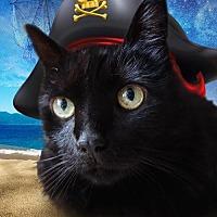 Adopt A Pet :: zz 'Quincy' courtesy post - Cincinnati, OH