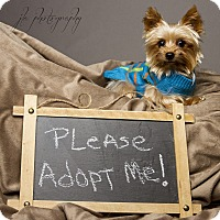 Adopt A Pet :: Carter - Baton Rouge, LA