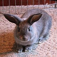 Adopt A Pet :: Limerick - Saanichton, BC