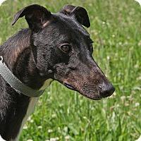 Adopt A Pet :: Jakey - Portland, OR