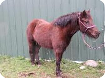Pony - Other Mix for adoption in Quilcene, Washington - Marla Bell