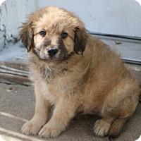 Adopt A Pet :: Eisenhower - Norwalk, CT