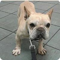 Adopt A Pet :: Doc - Columbus, OH