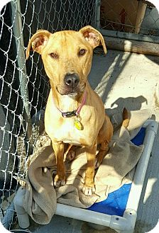 Terrier (Unknown Type, Medium) Mix Dog for adoption in Hanna City, Illinois - Heloise
