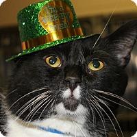 Adopt A Pet :: JASON - Clayton, NJ