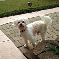 Adopt A Pet :: Bobo (FL) - Largo, FL