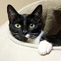 Adopt A Pet :: Puffin - Germantown, TN
