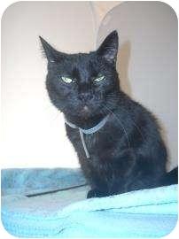 Domestic Shorthair Cat for adoption in North Charleston, South Carolina - Penelope