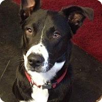 Adopt A Pet :: Sweet Boy - Nashville, TN