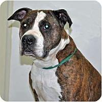 Adopt A Pet :: Daddy - Port Washington, NY