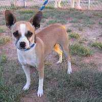 Adopt A Pet :: Paco - Wichita Falls, TX