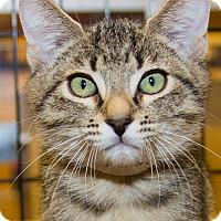 Adopt A Pet :: Seamus - Irvine, CA