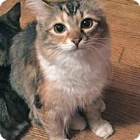 Adopt A Pet :: Johanna - Colorado Springs, CO