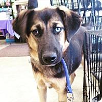 Adopt A Pet :: CURT - Pompton Lakes, NJ