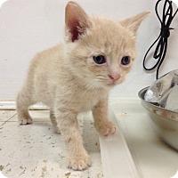 Adopt A Pet :: Legolas - River Edge, NJ