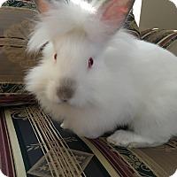 Adopt A Pet :: Luke - Watauga, TX