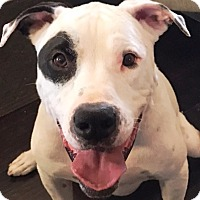 Adopt A Pet :: Turk - Casa Grande, AZ