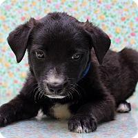 Adopt A Pet :: Rupert - Waldorf, MD