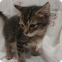 Adopt A Pet :: Doug - Gulfport, MS