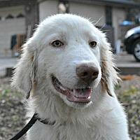 Adopt A Pet :: Taylor - Sunnyvale, CA