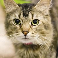 Adopt A Pet :: Nessie - Germantown, OH