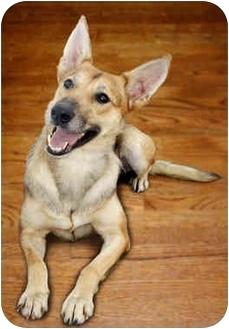 German Shepherd Dog/Greyhound Mix Dog for adoption in Marina del Rey, California - Muffin