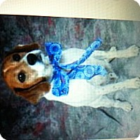 Adopt A Pet :: Lambeau - New Washington, IN