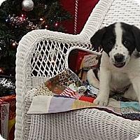Adopt A Pet :: Jill - Linton, IN