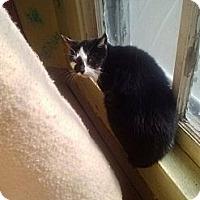 Adopt A Pet :: Jennie - Tarboro, NC
