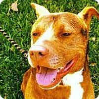 Adopt A Pet :: Biloxi - Austin, TX