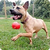 Adopt A Pet :: Lacey - Lapeer, MI