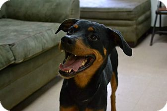 Rottweiler Mix Dog for adoption in Brookhaven, New York - Charlee