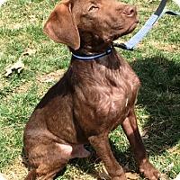 Adopt A Pet :: Columbo - Cincinnati, OH