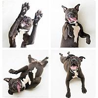 Adopt A Pet :: Aliza - Alpharetta, GA